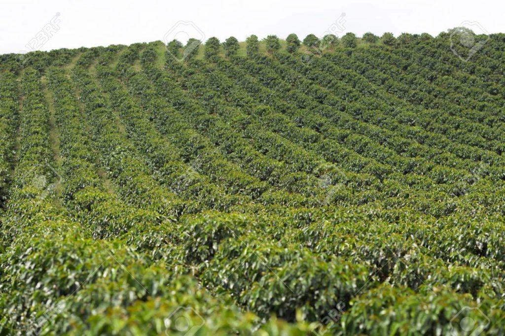 Cyclic Timer for Coffee / Tea Plantation